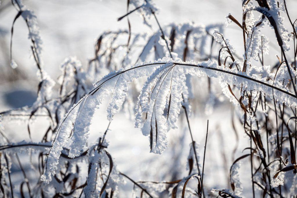 makro-schnee-winter-unschaerfe-halme